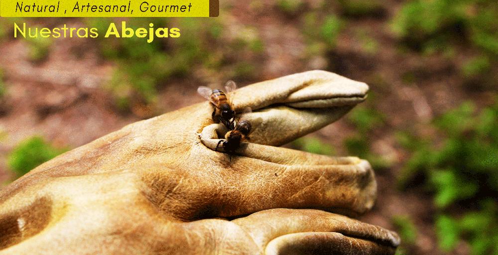 abeja apis melifera