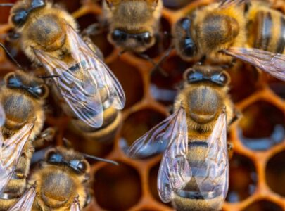 Cuidemos a las abejas