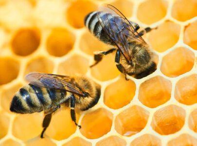 El excelente ejemplo de organización que nos dan las abejas