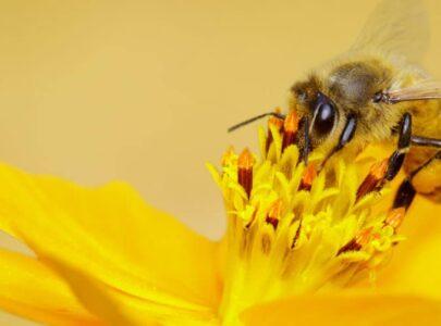 ¿Cómo ayudar a las abejas desde casa?