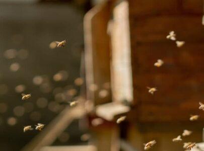 Lo que no sabías de las abejas